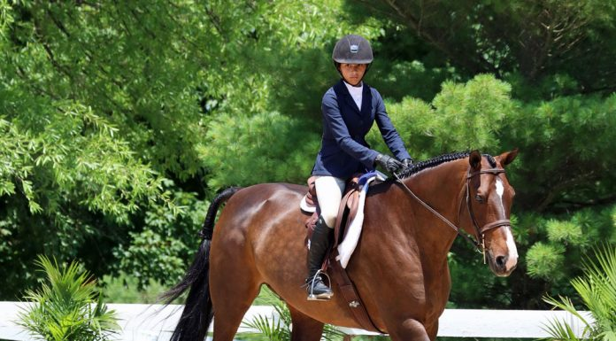 Hunt seat equitation trot