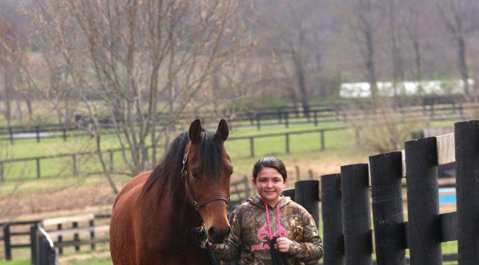 Kid leading a bay Morgan horse