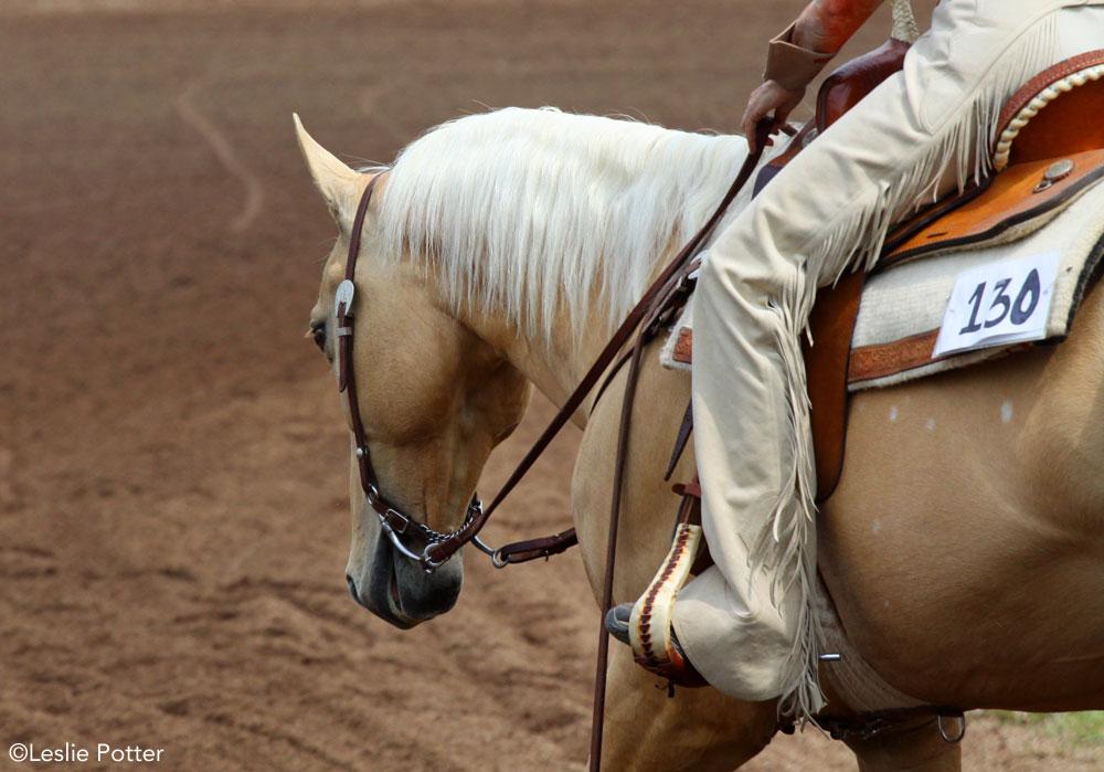 Palomino western show horse