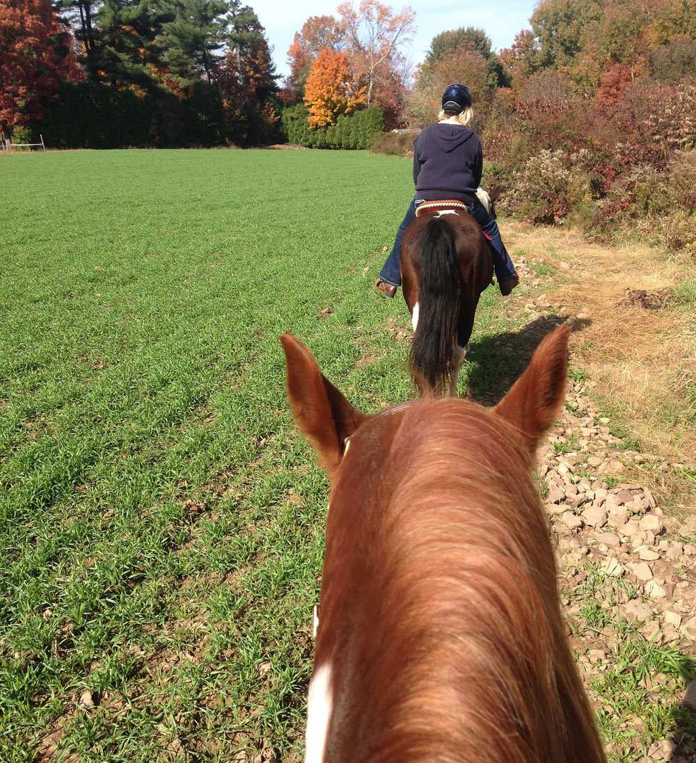 Group trail ride seen through horse's ears