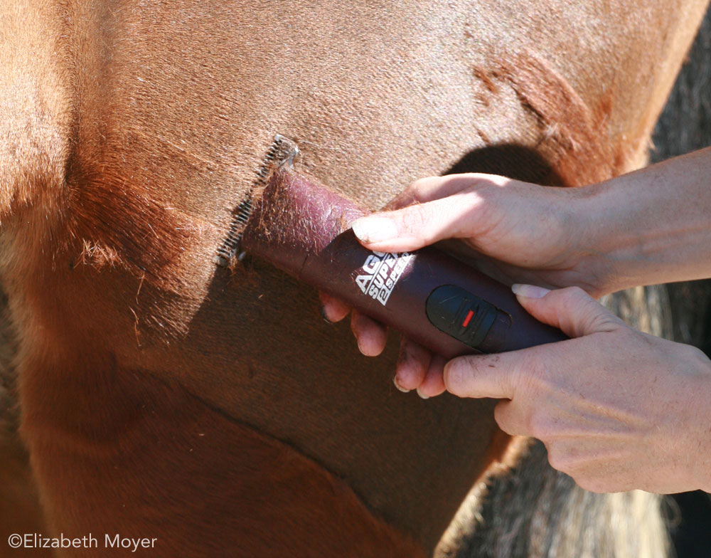 Closeup of body clipping a horse