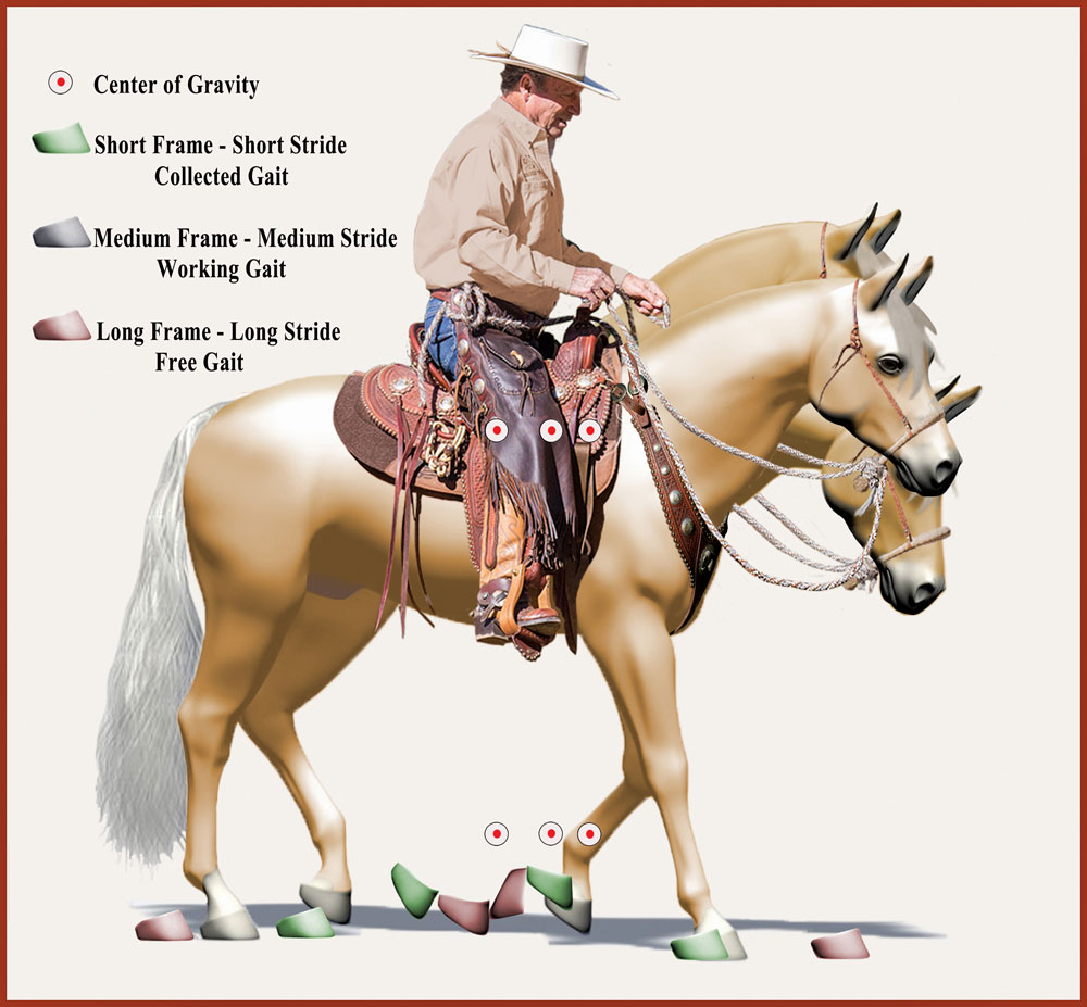 Diagram of cowboy dressage frames