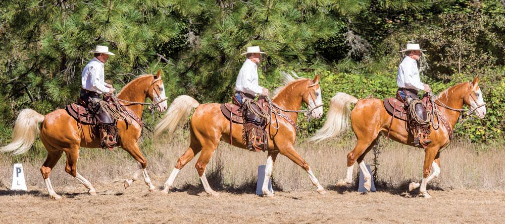 Cowboy dressage lope