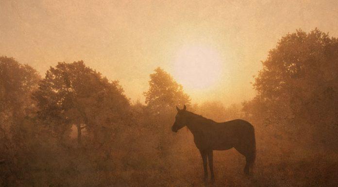 Horse silhouette at sunrise