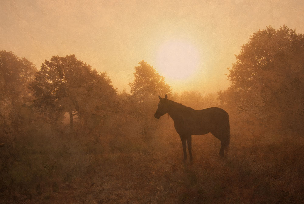 Horse silhouette at sunrise