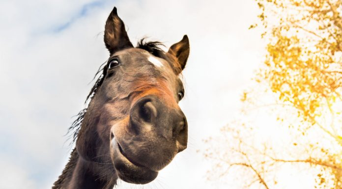 Horse face from below