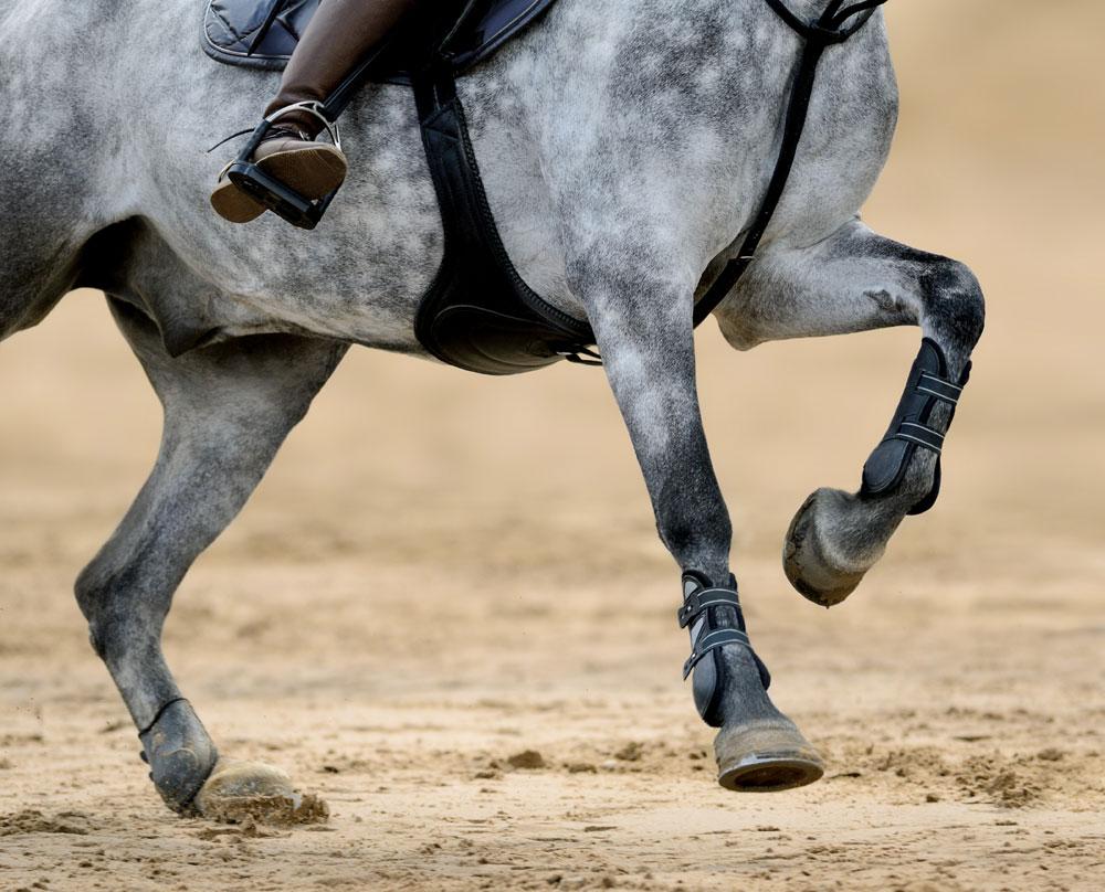 Gray horse's legs