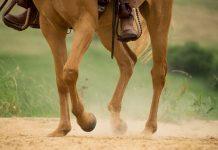 Western horse legs jogging