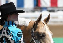 Palomino Quarter Horse showmanship
