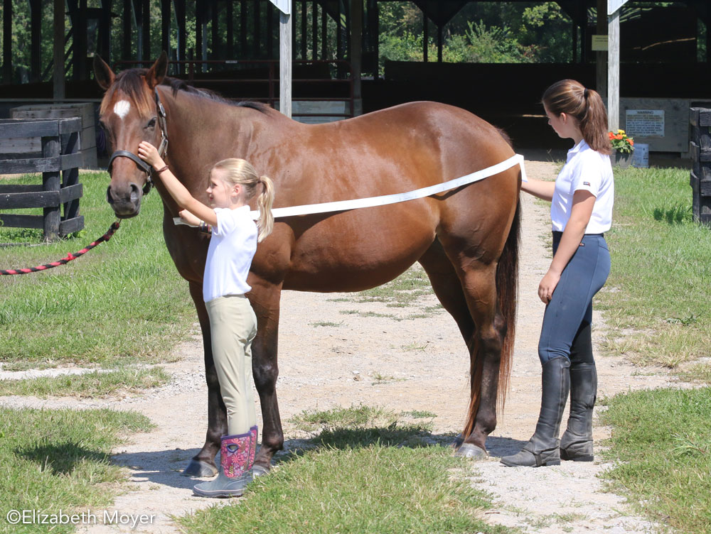 Measuring a horse for a blanket
