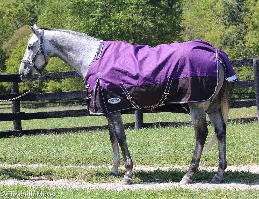 Horse in a blanket that is too small