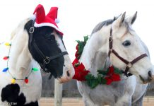 Ponies wearing Christmas decorations