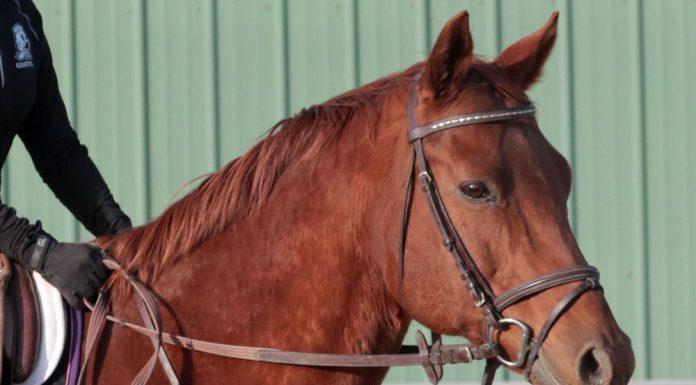 English horse head shot