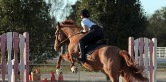 Young rider practing jumping
