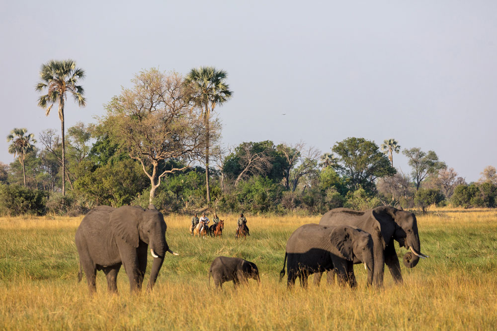 Elephants and a horseback safari in Botswana