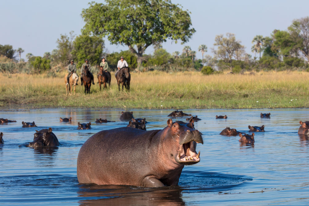 Hippos and a horseback safari