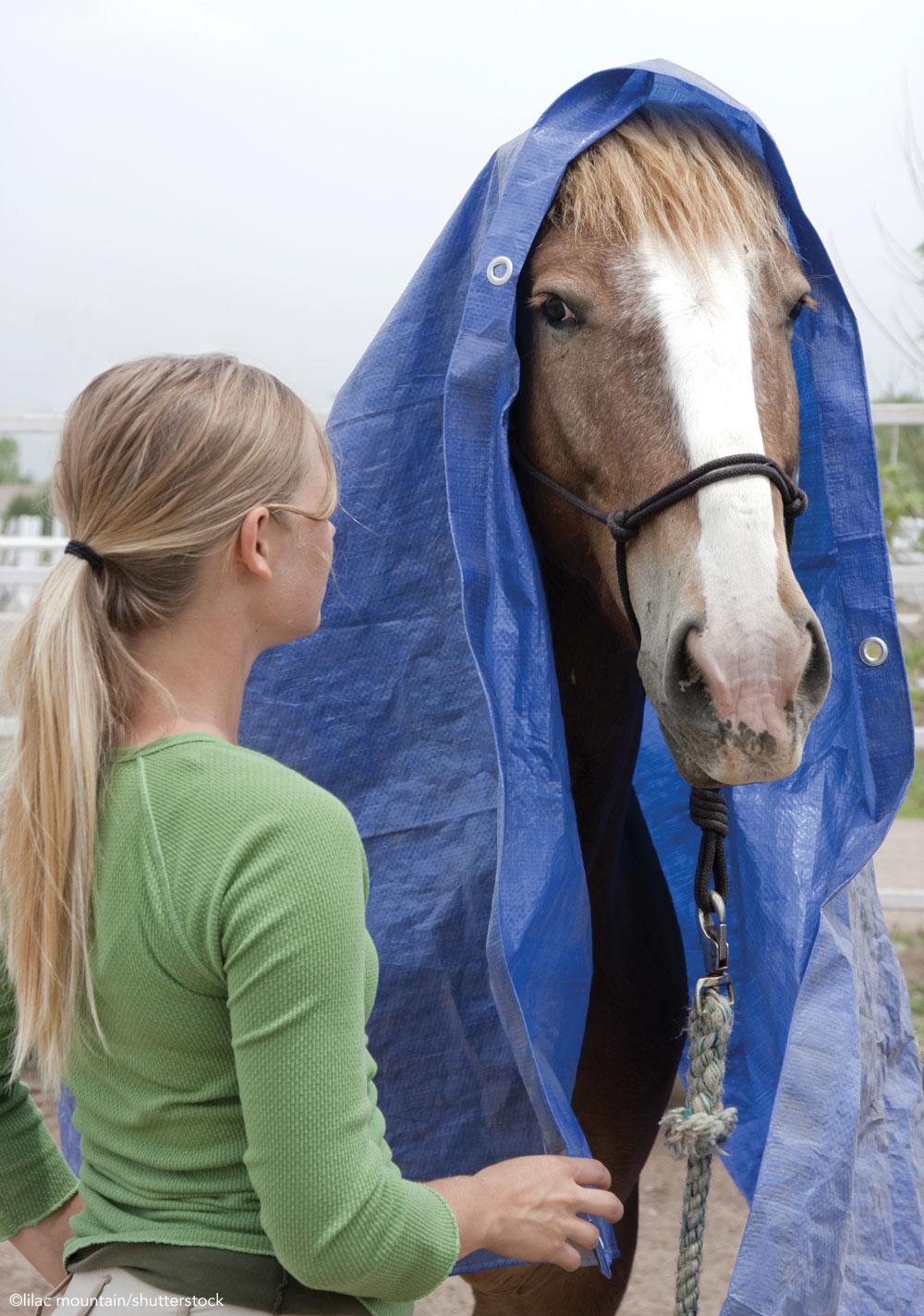 Horse wearing a tarp
