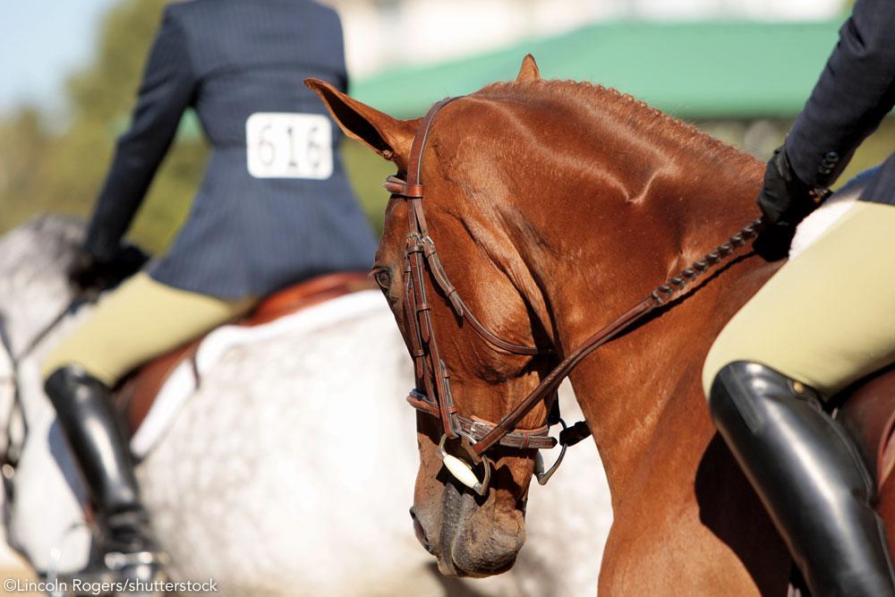 English riding hand position