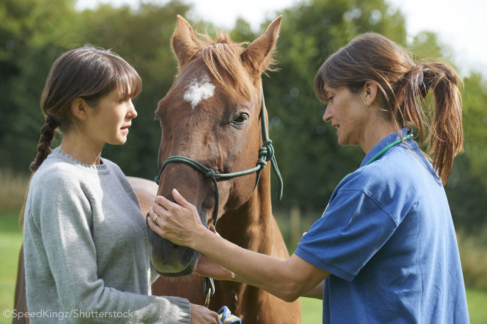 Horse and equine vet