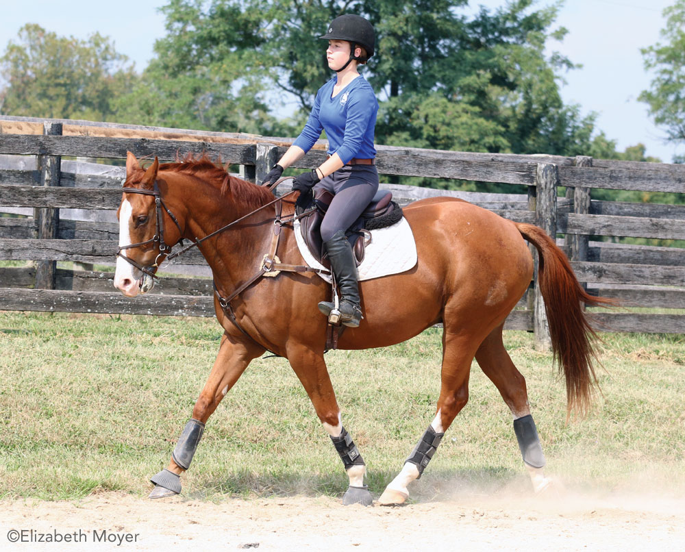 Trotting English horse
