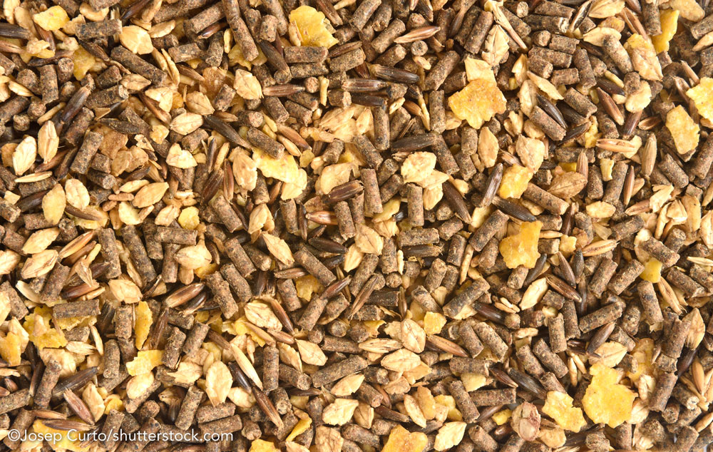 Closeup of horse feed