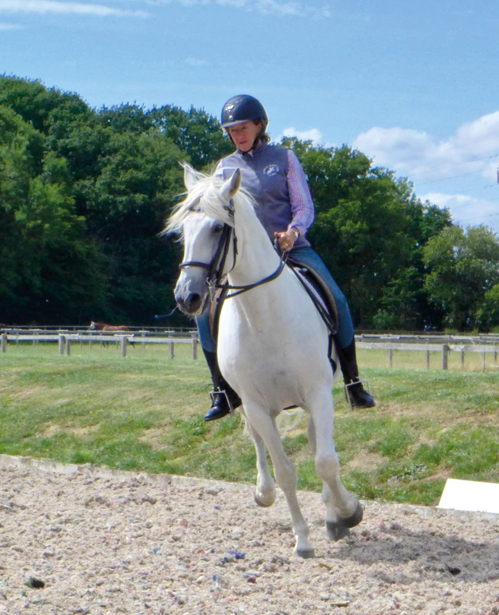Horse and rider canter transition
