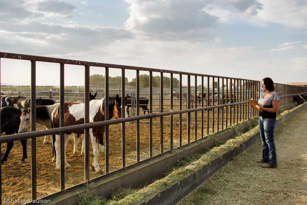 Trainer Annie MacDermaid observes adoptable Mustangs at the BLM facility in Delta, Utah.