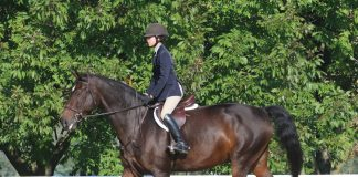 Young rider on a horse at a horse show