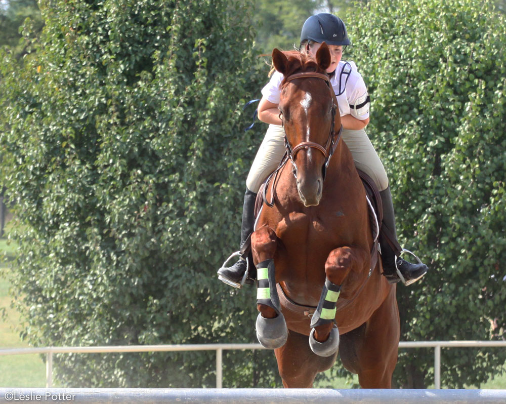 Horse wearing protective boots while jumping