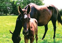 Thoroughbred mare Arravale with her 2018 colt by American Pharoah