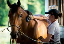 Capt. Lindsey Colburn, 11th Wing executive officer, brushes her horse, Soon