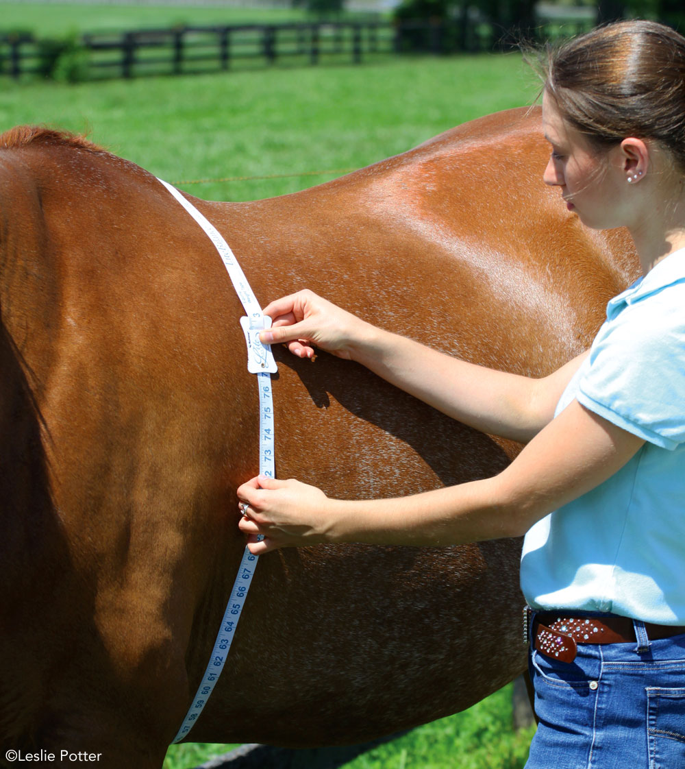 Measuring a horse's weight with a weight tape