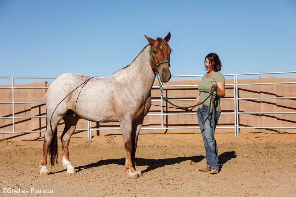 Halter training a Mustang in the round pen