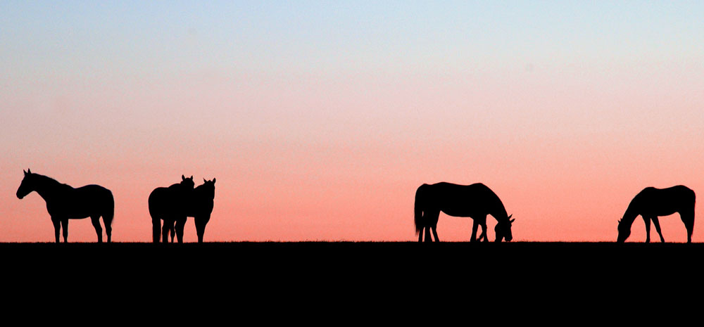Cavalos ao pôr do sol
