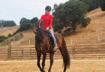 Riding exercises at the walk