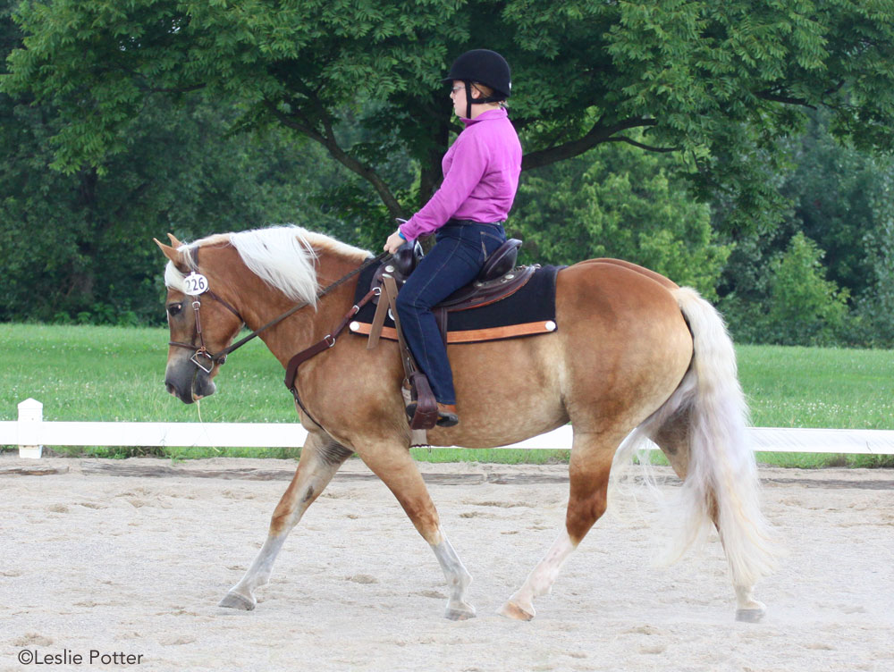 Haflinger jogging in a western dressage test