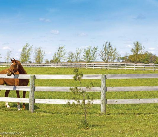Horse standing behind wood fence