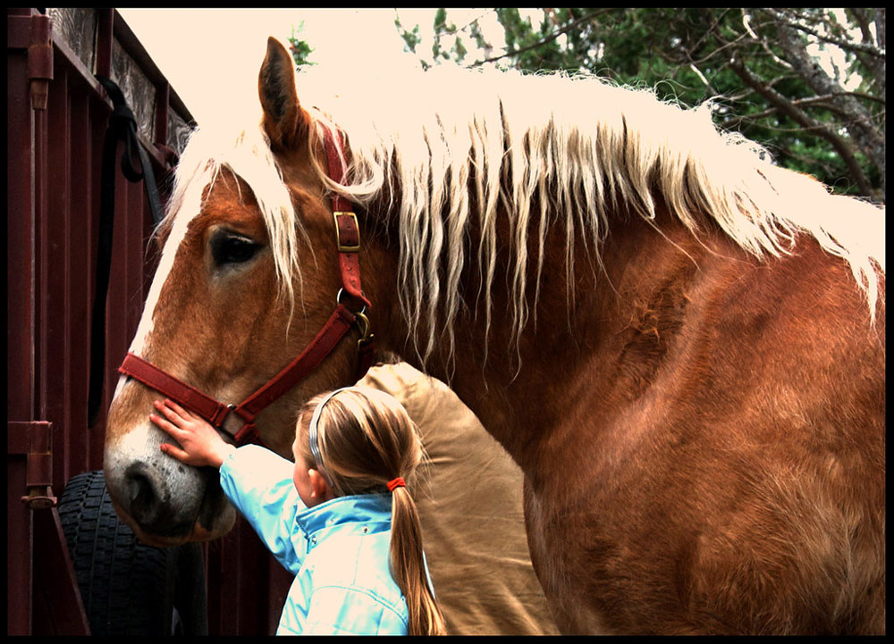 Girl and Belgian horse