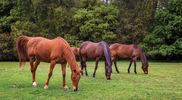 Group of horses grazing together in a pasture