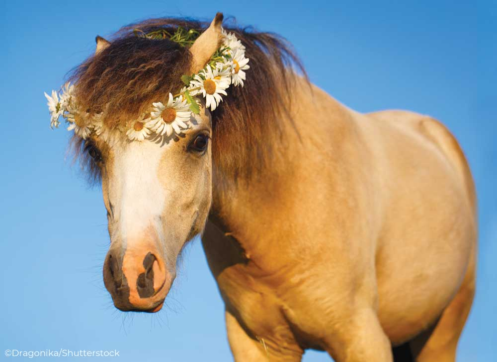 Pony wearing a crown of daisies