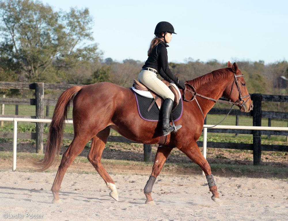 Rider in the down phase of the posting trot