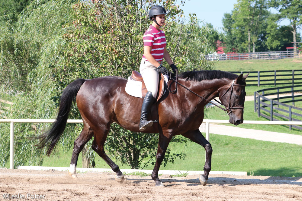 English rider riding without stirrups