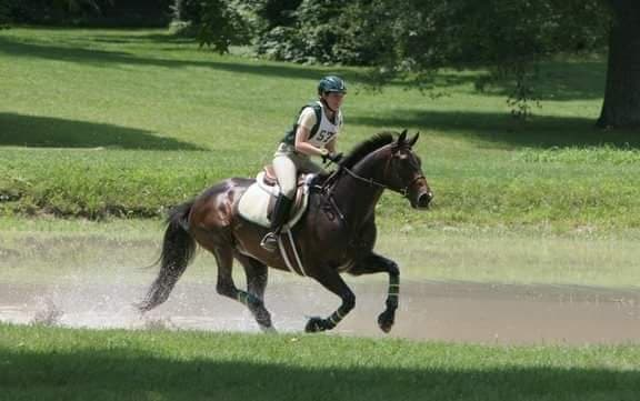 Gold Style, Thoroughbred eventer, galloping through the water on a cross-country course