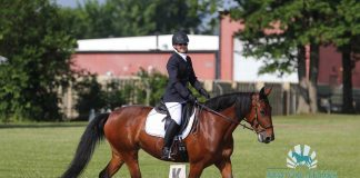 Standardbred competing in dressage