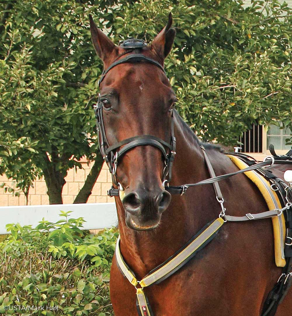 Standardbred horse Foiled Again