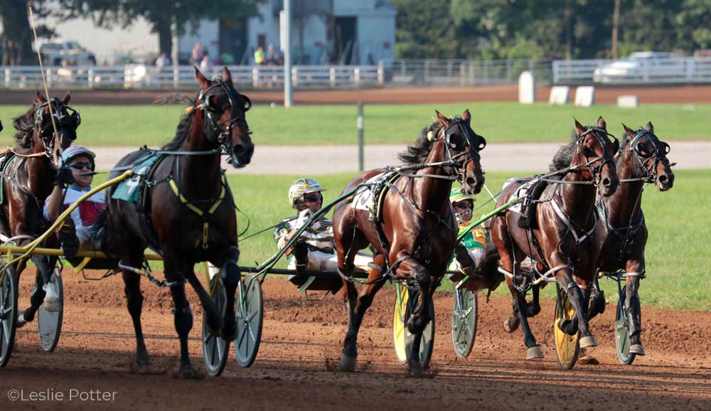 Standardbred horses in a harness race