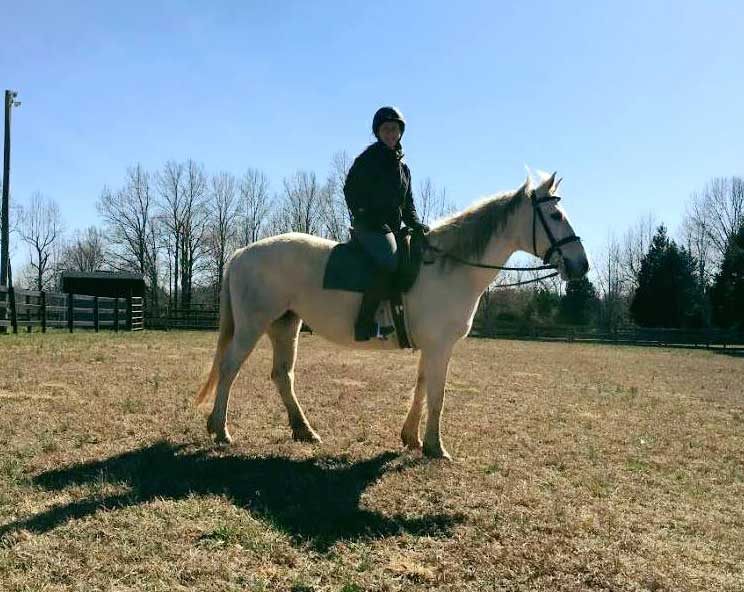 Skye, a Quarter Horse cross available for adoption at Heart of Phoenix
