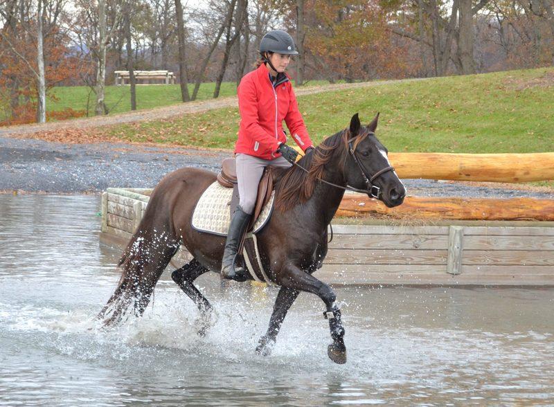 Casino, an adoptable Appaloosa mare located in Woodbine, Maryland.