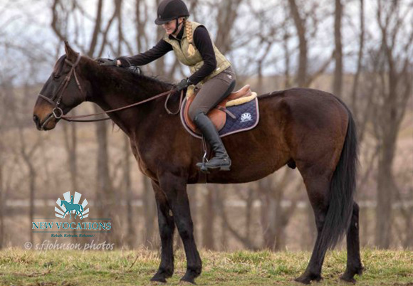Express Stride N, an adoptable Standardbred at New Vocations in Ohio