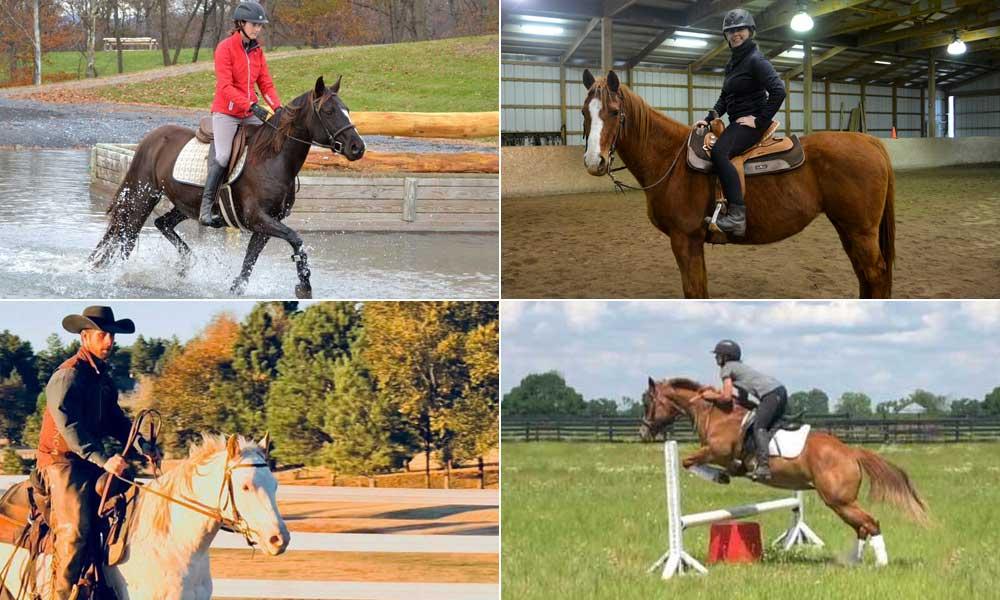 Four adoptable horses